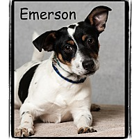 Adopt A Pet :: Emerson - Warren, PA