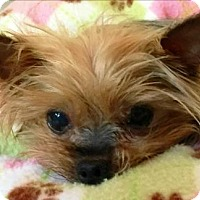 Adopt A Pet :: Charley (Not accepting apps yet - stay tuned) - Whiting, NJ
