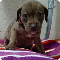 Adopt A Pet :: Bubbles - Hillside, IL
