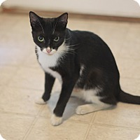 Adopt A Pet :: Bootsie - Dalton, GA