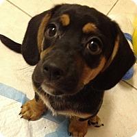 Adopt A Pet :: Woody - San Ysidro, CA