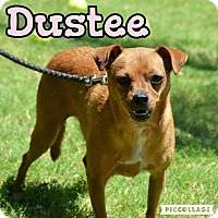Adopt A Pet :: Dustee - Scottsdale, AZ