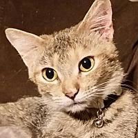 Adopt A Pet :: ♥ Lysa ♥ - Middleburg, FL