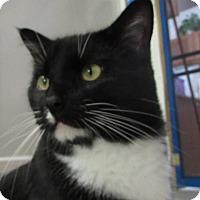 Adopt A Pet :: SIMON 2 - Jackson, MO