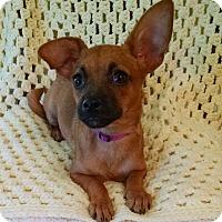 Adopt A Pet :: Emma - Palestine, TX