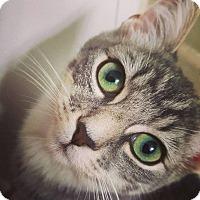 Adopt A Pet :: Walter - Toronto, ON