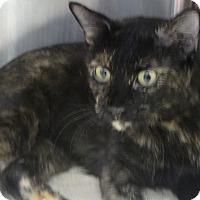 Adopt A Pet :: CLEOPATRA - Tucson, AZ