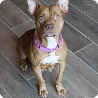 Adopt A Pet :: RUBY - Wellington, FL