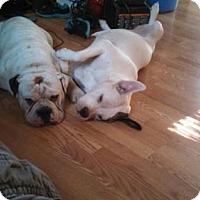 Adopt A Pet :: Monty & Zelda - Trenton, NJ