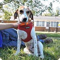 Adopt A Pet :: Ridge - Berkeley Heights, NJ