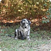 Adopt A Pet :: feena - Groton, MA