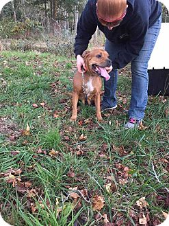 Pit Bull Terrier Mix Dog for adoption in Franklinville, New Jersey - Jersey Girl