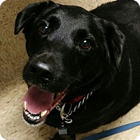 Adopt A Pet :: Howie - House Springs, MO