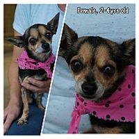Adopt A Pet :: Starlet - Boerne, TX