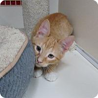 Adopt A Pet :: Garfield - Richmond, VA