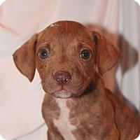 Adopt A Pet :: Impreza - Gilbertsville, PA