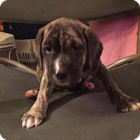 Adopt A Pet :: McKinley - Plano, TX