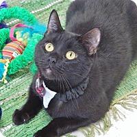 Adopt A Pet :: Winchester - Chambersburg, PA