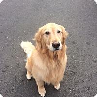Adopt A Pet :: Angel - Vancouver, WA