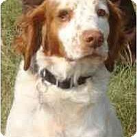 Adopt A Pet :: Jaxon-NY - Buffalo, NY