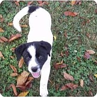 Adopt A Pet :: Mindy - Adamsville, TN