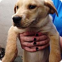 Adopt A Pet :: Sneezy - Silsbee, TX