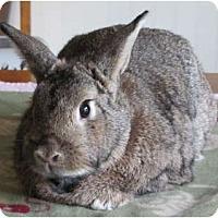 Adopt A Pet :: Tina - Williston, FL