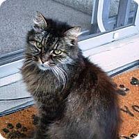 Adopt A Pet :: Malcolm Moogie - Davis, CA