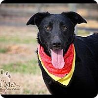 Adopt A Pet :: Magic - Wilmington, DE