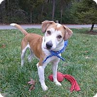 Adopt A Pet :: Zach - Mocksville, NC