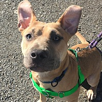 Adopt A Pet :: Mary Kate - Staatsburg, NY