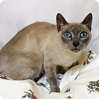 Adopt A Pet :: Ellie - Addison, IL