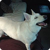 Adopt A Pet :: Suka - LaGrange, OH