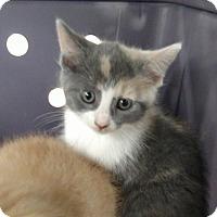 Adopt A Pet :: Tequila - Fredericksburg, VA