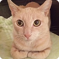 Adopt A Pet :: Caramel - Thornhill, ON