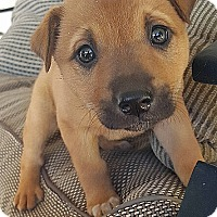 Adopt A Pet :: FAWNA - Winnetka, CA