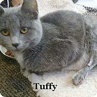 Adopt A Pet :: Tuffy - Bentonville, AR