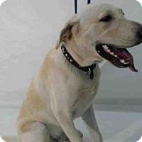 Adopt A Pet :: JASS - Orlando, FL