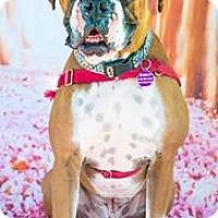 Adopt A Pet :: Max D5031 - Fremont, CA