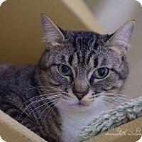 Adopt A Pet :: Penelope - Flower Mound, TX