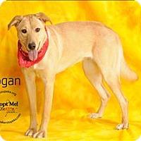 Adopt A Pet :: Logan - Topeka, KS