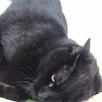 Adopt A Pet :: Licorice - Fort Lauderdale, FL