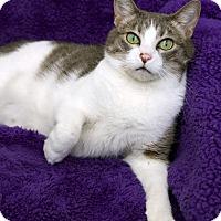 Adopt A Pet :: Brandolynn - St Louis, MO