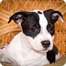 Adopt A Pet :: Bugs St. Croix