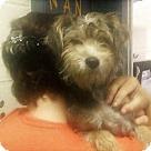 Adopt A Pet :: Ginnie (Has application)