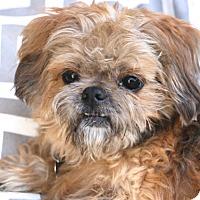 Adopt A Pet :: Thomas - Woonsocket, RI