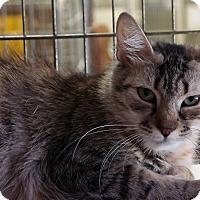 Adopt A Pet :: Chynna - Trevose, PA