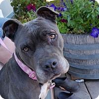 Adopt A Pet :: Pebbles - McKenna, WA