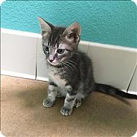 Adopt A Pet :: Egon - Riverside, CA
