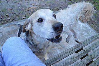 Hound (Unknown Type)/Shepherd (Unknown Type) Mix Dog for adoption in wilson, North Carolina - ~~BINGO~~